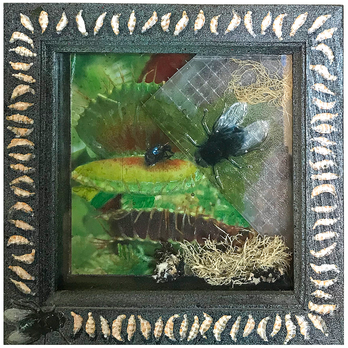 Venus Fly Trap assemblage