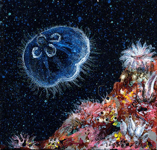 anemones, squirts and jellies
