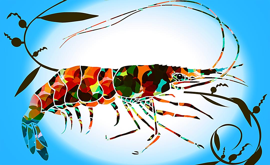 spotted prawn card